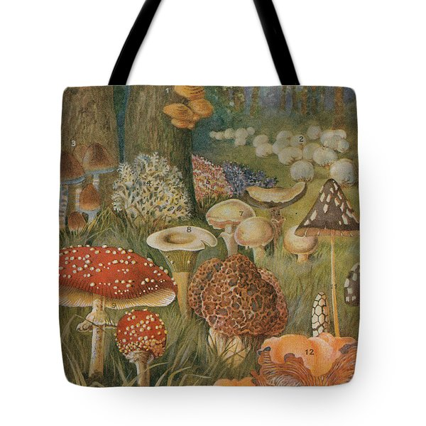 Citizens Of The Land Of Mushrooms Tote Bag by Science Source