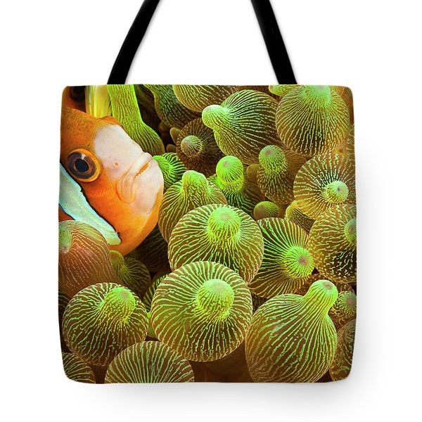 Clark S Anemonefish  Amphiprion Clarkii Tote Bag
