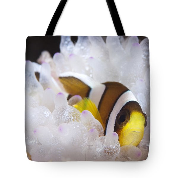 Clarks Anemonefish In White Anemone Tote Bag by Steve Jones