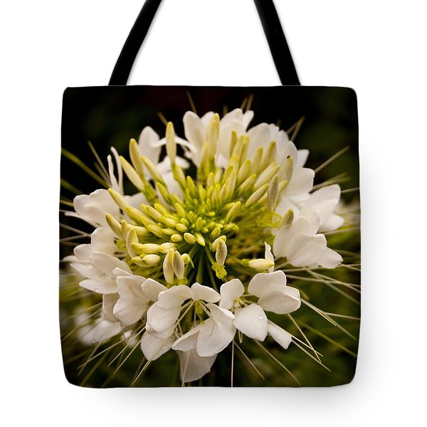 Tote Bag featuring the photograph Cleome Hassleriana  by Ben Shields