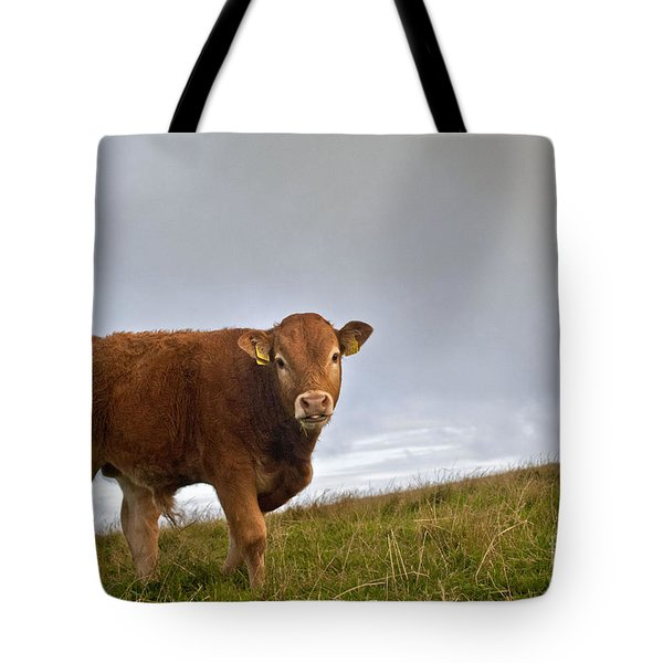 Cliffs Of Moher Brown Cow Tote Bag
