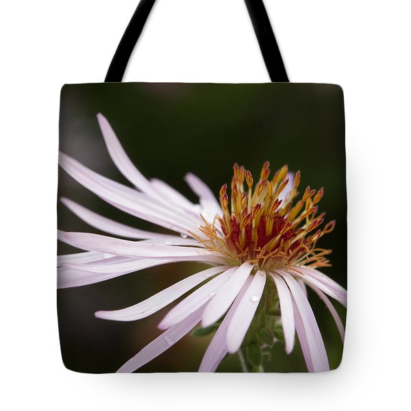 Tote Bag featuring the photograph Climbing Aster by Paul Rebmann