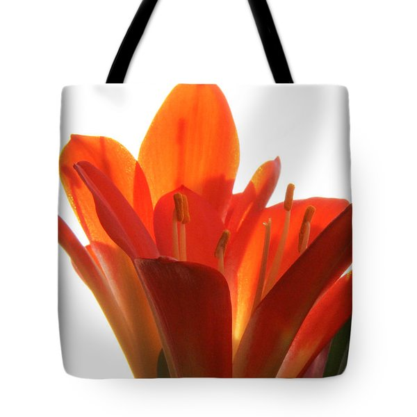 Tote Bag featuring the photograph Clivia by Jivko Nakev