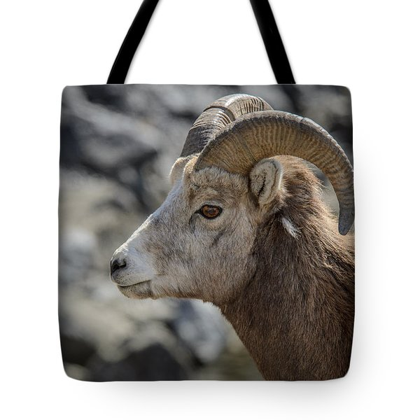 Close Big Horn Sheep  Tote Bag