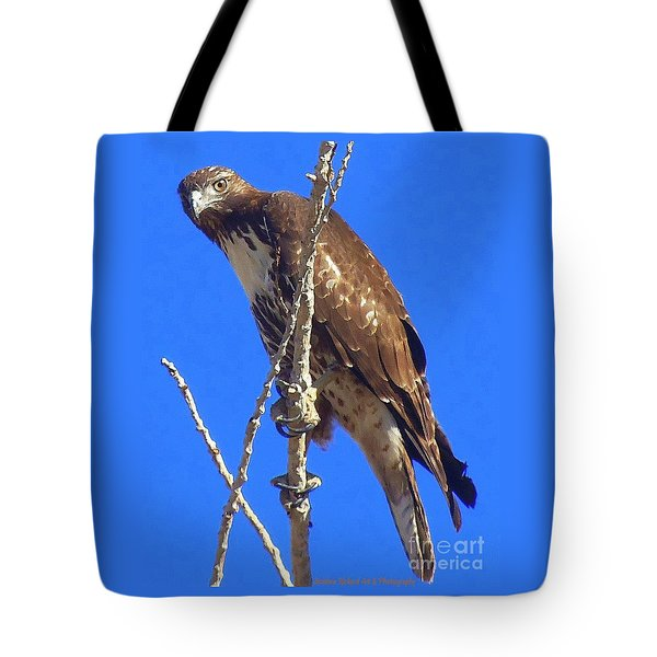 Hawk Close Up  Tote Bag