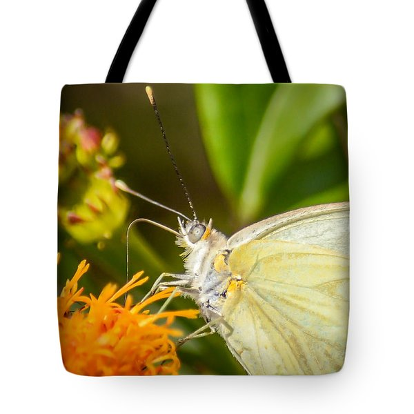 Butterfly Attracted To Mexican Flame Tote Bag by Debra Martz