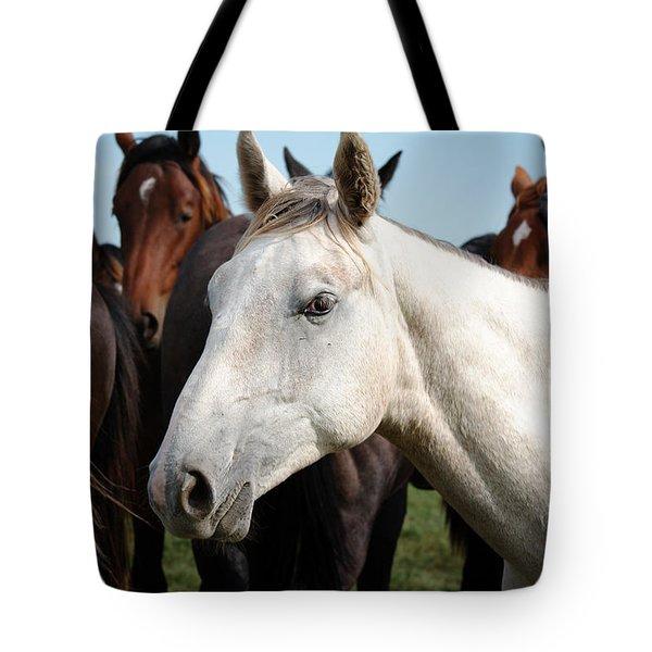 Close-up Herd Of Horses. Tote Bag
