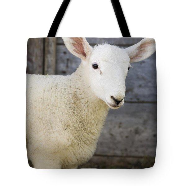 Close Up Of A Baby Lamb Tote Bag