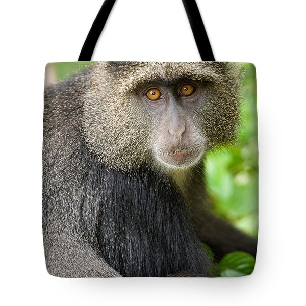Close-up Of A Blue Monkey Cercopithecus Tote Bag