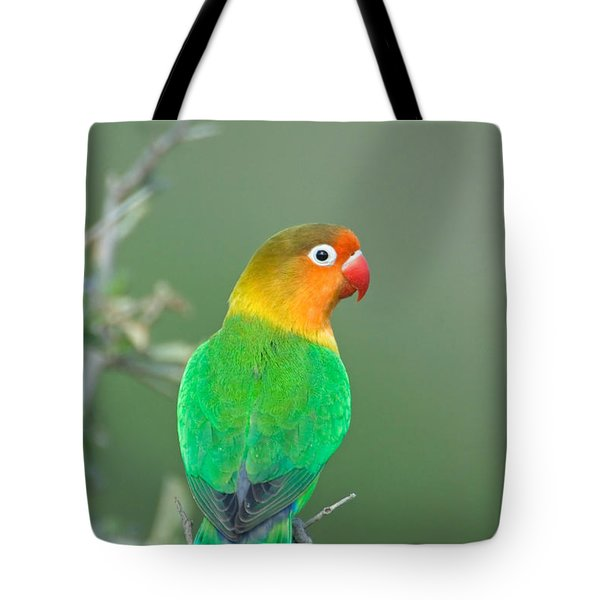 Close-up Of A Fischers Lovebird Tote Bag