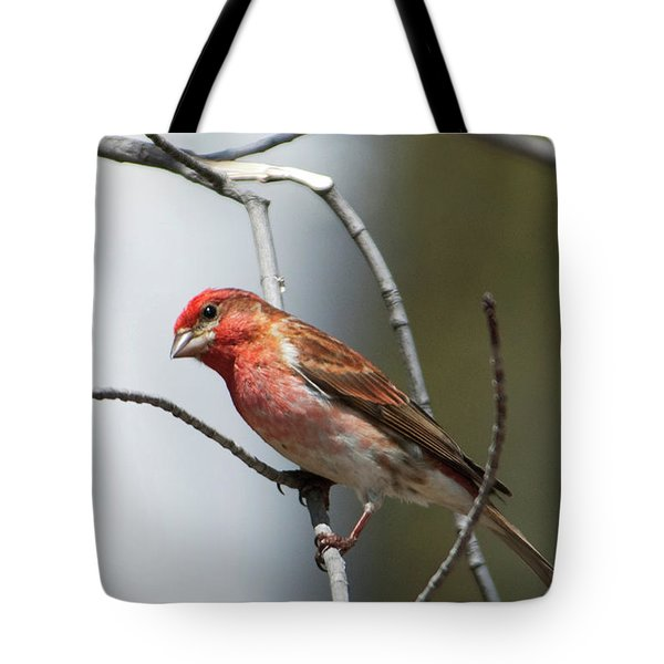 Close-up Of A Red-headed Purple Finch Tote Bag