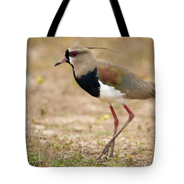 Close-up Of A Southern Lapwing Vanellus Tote Bag by Panoramic Images