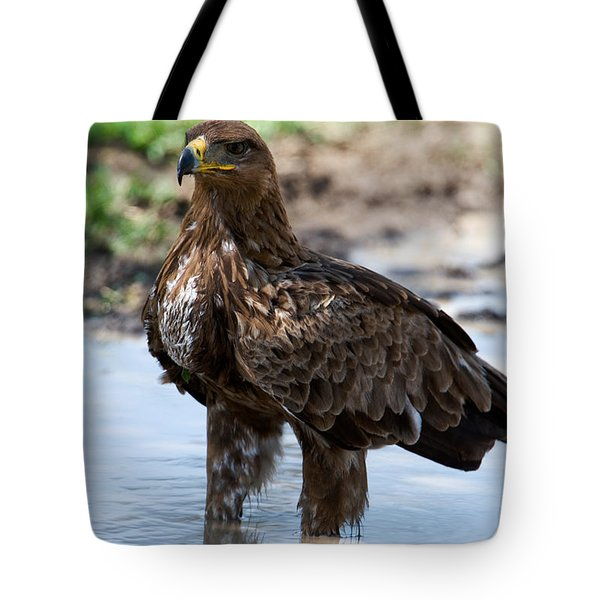 Close-up Of A Tawny Eagle Aquila Rapax Tote Bag