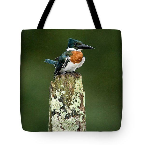 Close-up Of Amazon Kingfisher Tote Bag
