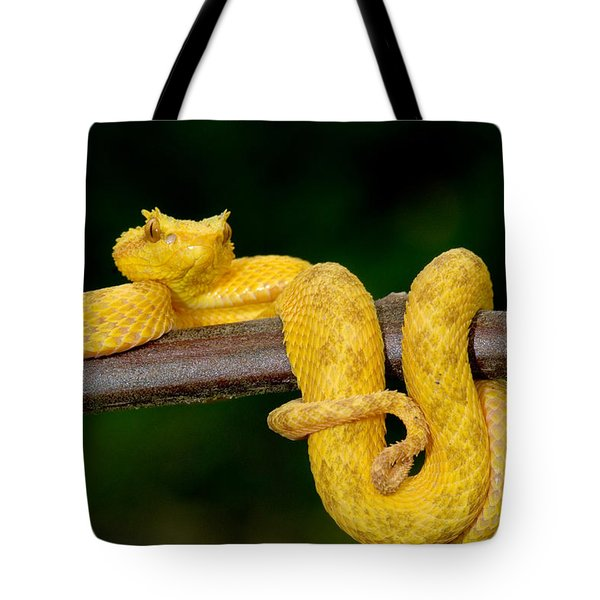 Close-up Of An Eyelash Viper Tote Bag