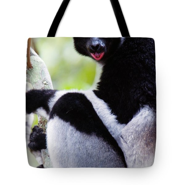 Close-up Of An Indri Lemur Indri Indri Tote Bag