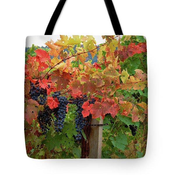 Close-up Of Cabernet Sauvignon Grapes Tote Bag