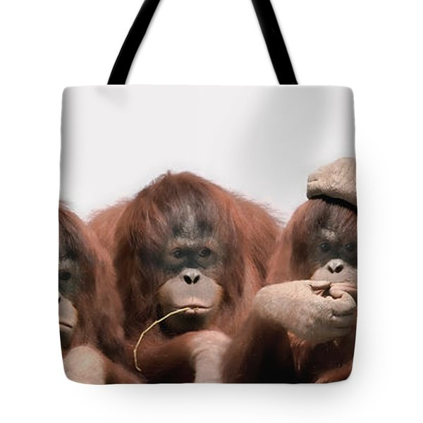 Close-up Of Three Orangutans Tote Bag by Panoramic Images