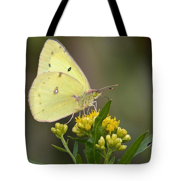 Clouded Sulphur Tote Bag by Randy Bodkins