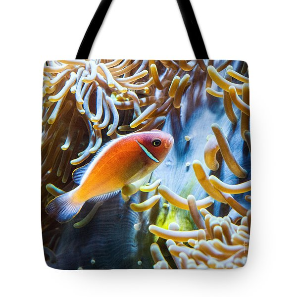 Clown Fish - Anemonefish Swimming Along A Large Anemone Amphiprion Tote Bag by Jamie Pham