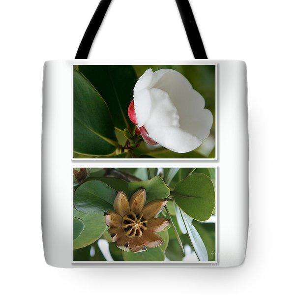 Clusia Rosea - Clusia Major - Autograph Tree - Maui Hawaii Tote Bag by Sharon Mau