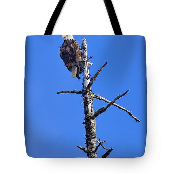 Coastal Bald Eagle Tote Bag