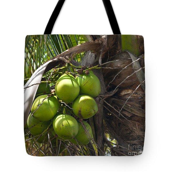 Coconuts Proliferate Tote Bag by Michelle Wiarda