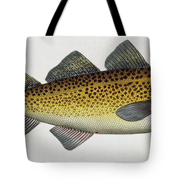 Cod Tote Bag by Andreas Ludwig Kruger