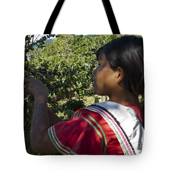 Coffee Harvest Time 3 Tote Bag by Heiko Koehrer-Wagner