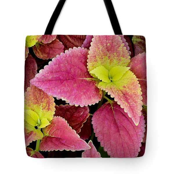 Coleus Colorfulius Tote Bag by David Lawson