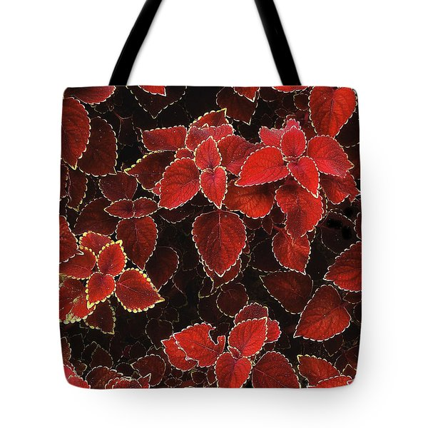 Coleus Tote Bag by Jessica Jenney