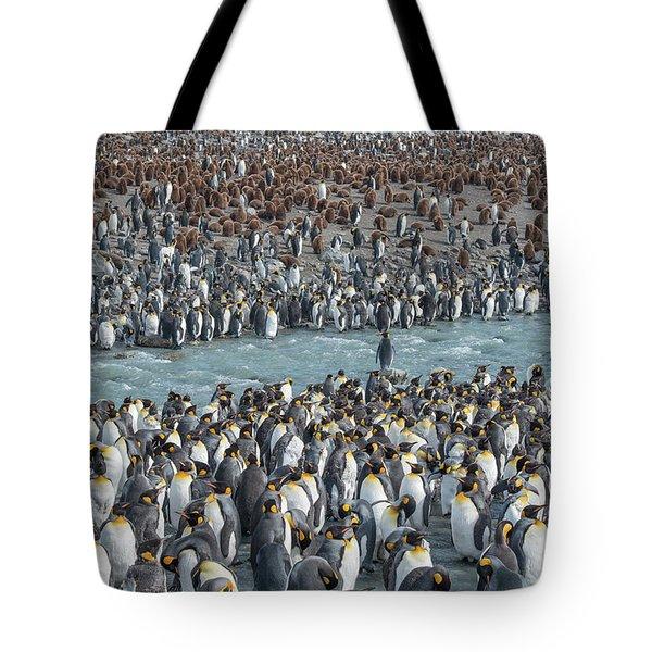 Colony Of King Penguins, Aptenodytes Tote Bag