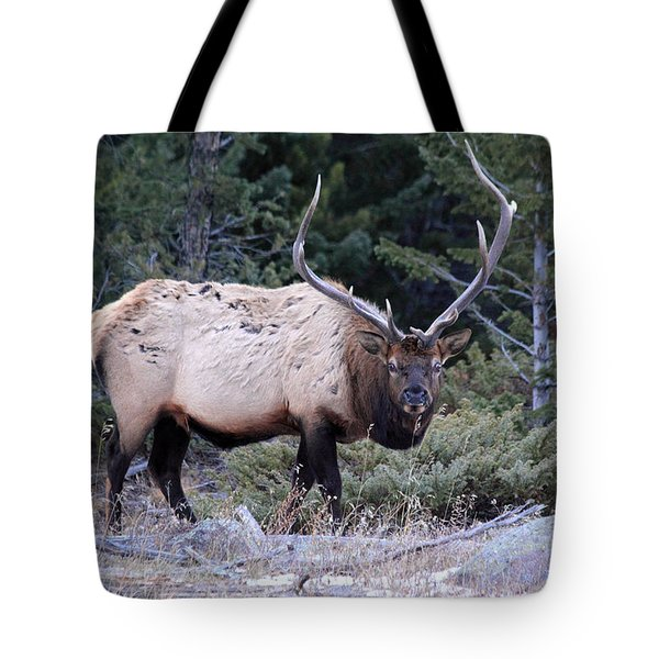 Colorado Bull Elk Tote Bag