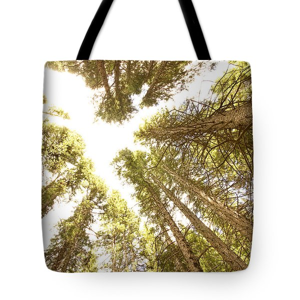 Colorado Rocky Mountain Forest Ceiling Tote Bag by James BO  Insogna