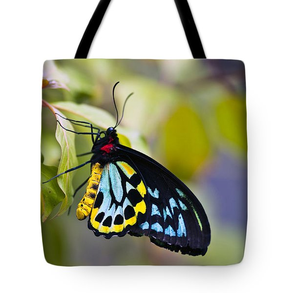 colorful butterfly Ornithoptera priamus Tote Bag