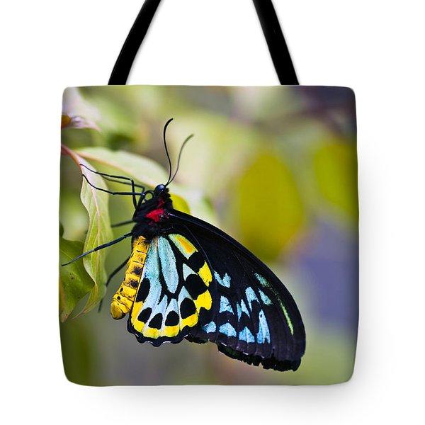 colorful butterfly Ornithoptera priamus Tote Bag