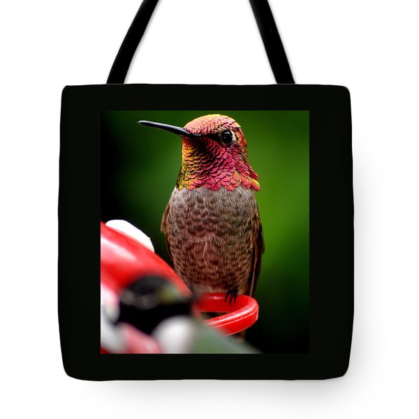 Tote Bag featuring the photograph Colorful Male Anna Hummingbird On Perch by Jay Milo
