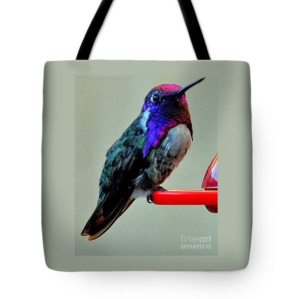 Tote Bag featuring the photograph Colorful Male Costa's On Perch by Jay Milo
