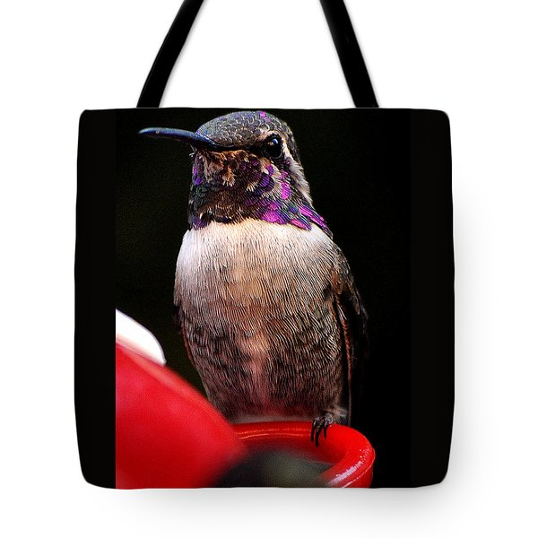Tote Bag featuring the photograph Colorful White Eared Male Hummingbird Anna Posing On Perch by Jay Milo
