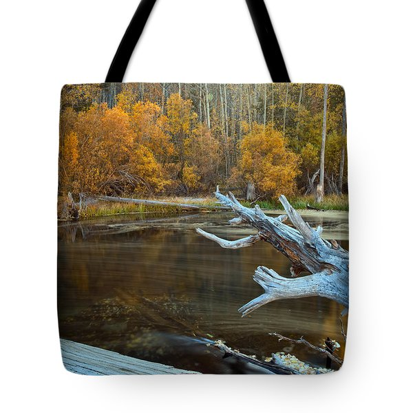 Tote Bag featuring the photograph Colors Of The Forest by Jonathan Nguyen