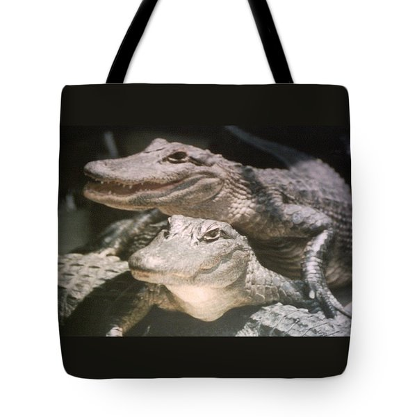 Tote Bag featuring the photograph Florida Alligators Come Closer by Belinda Lee