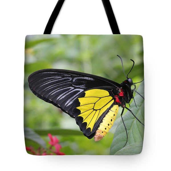 Tote Bag featuring the photograph Common Birdwing Butterfly by Judy Whitton