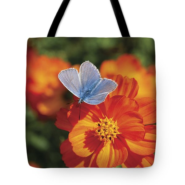 Tote Bag featuring the photograph Common Blue Butterfly by Lana Enderle