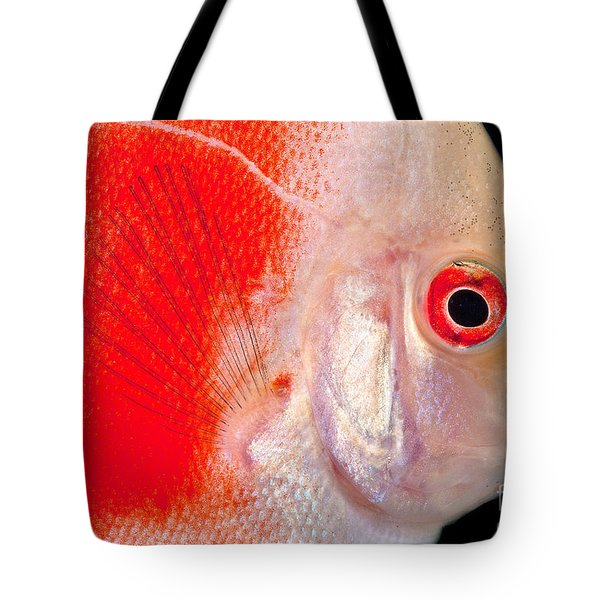 Common Discus Tote Bag by Dante Fenolio