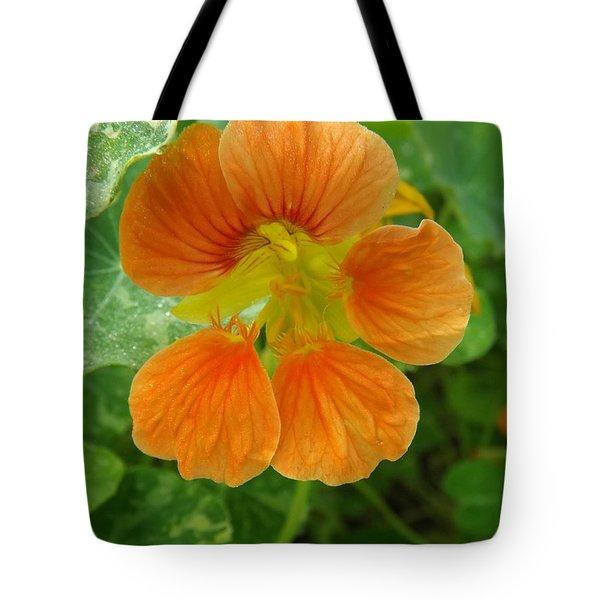 Common Nasturtium Tote Bag