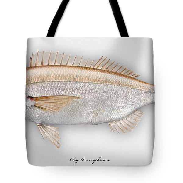 Common Pandora Pagellus Erythrinus - Pageot Commun - Breca - Bica - Punapagelli - Seafood Art Tote Bag