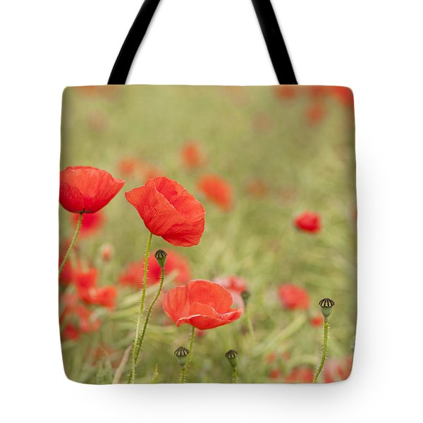 Common Poppies Tote Bag by Anne Gilbert