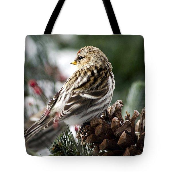 Common Redpoll Tote Bag by Christina Rollo