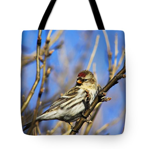 Common Redpoll Female Tote Bag by Alyce Taylor