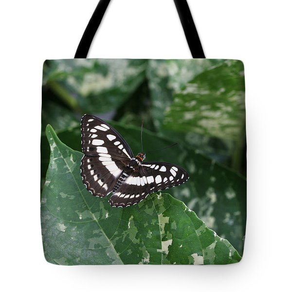 Common Sergeant Butterfly Tote Bag